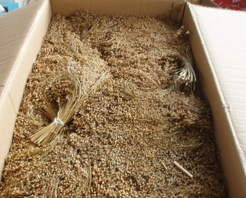 AVIONE 10KG BOXED WHITE MILLET